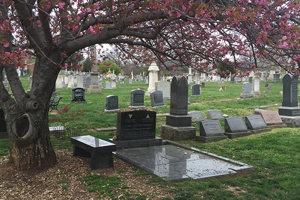A tree with pink-flowered colors hangs over a gravesite at Congressional Cemetary. Several other gravesites are in the background.