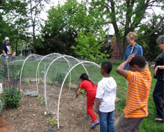 Image: In spring 2011, students planted sweet potato ivy to grow over a wire tunnel. It made a fun place to play, too.